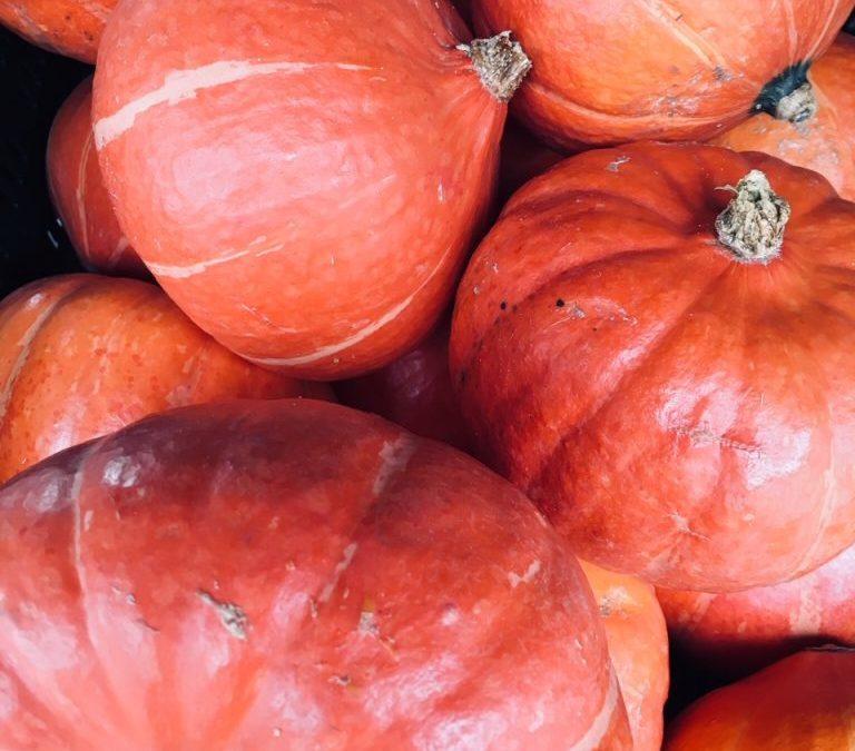Ayurveda im Herbst: Wie du dich in der windigen Jahreszeit ganzheitlich erdest